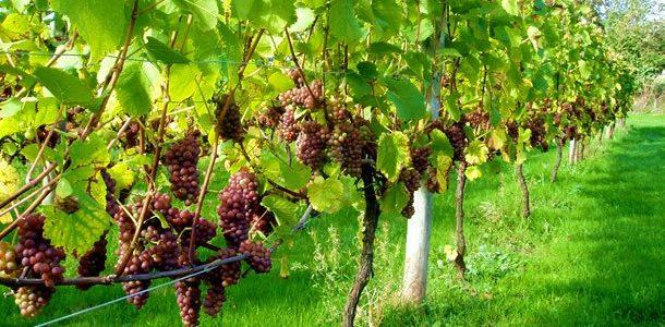 Portské vína Quinta do Portal
